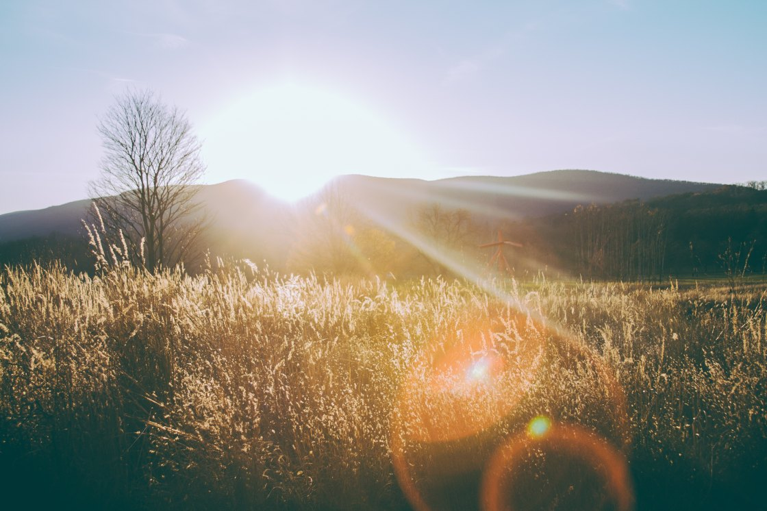Sunshine on a field of wheat, with a mountain in the horizon.